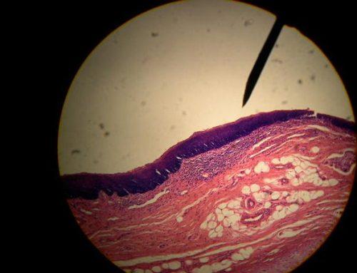 Histologia Básica – Tecido Epitelial