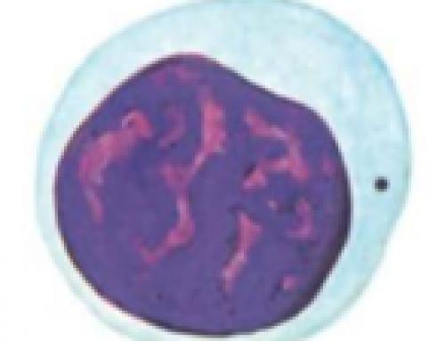 Histologia Básica – Células do sangue